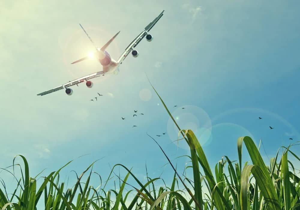 Sustainable Aviation Is the Future